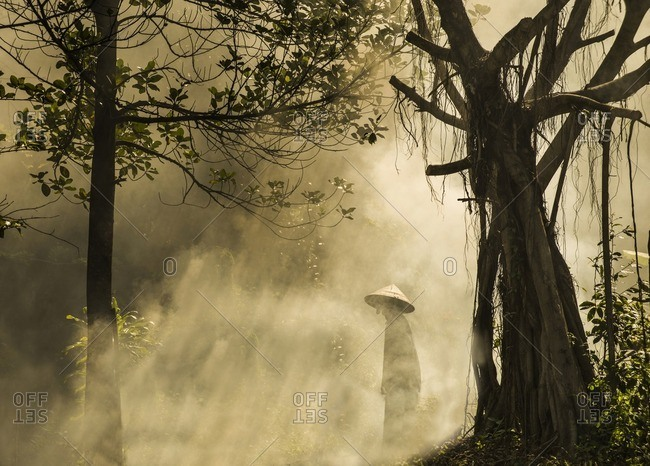 Person in conical hat walking in forest during foggy weather
