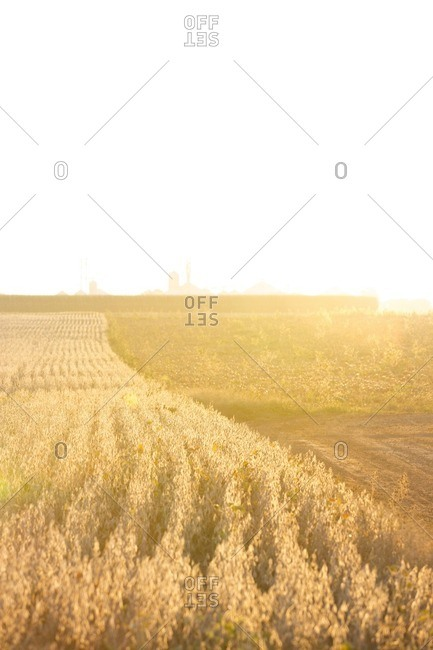 Scenic view of farm against clear sky on sunny day
