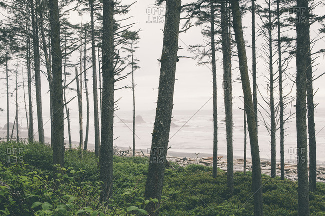 Trees growing at Ruby Beach