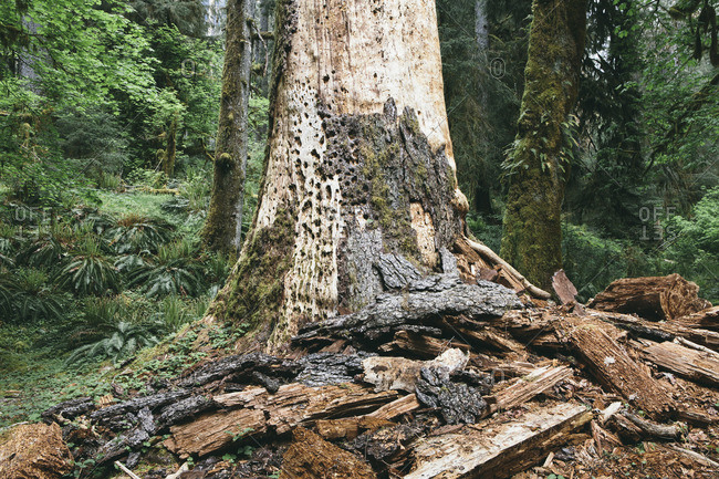 Plant barks by tree in forest