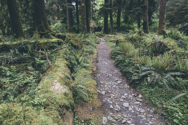 Trail amidst trees growing in forest