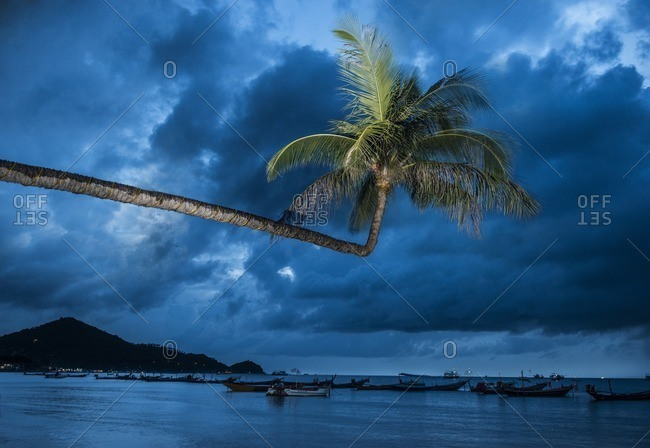 Palm tree over boats moored at sea against cloudy sky