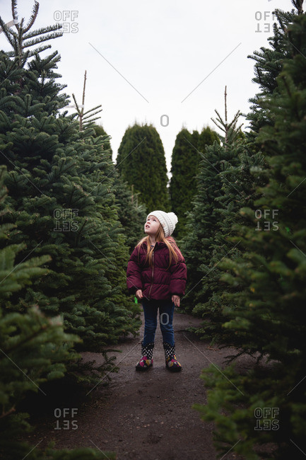Girl staring up in a tree farm
