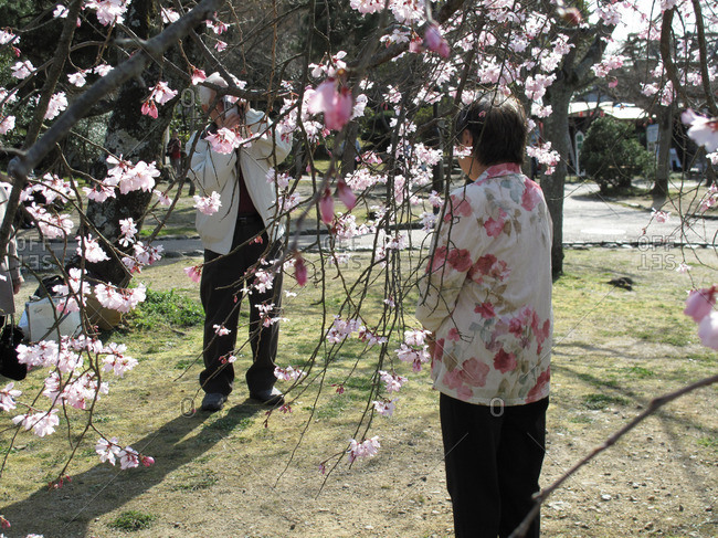 Man taking picture of woman in cherry blossoms