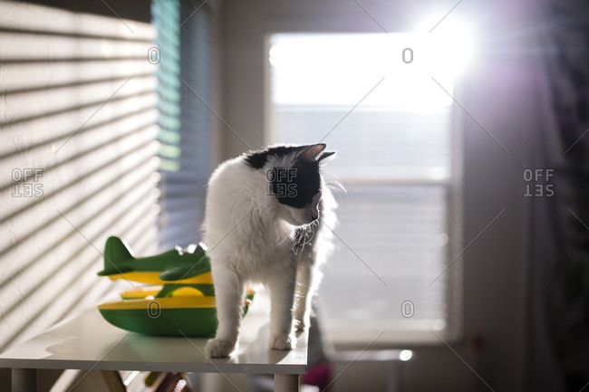Cat climbing on top of a shelf