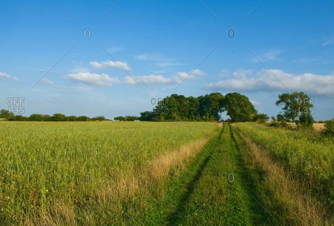 Field with pathway,  Cherington, Gloucestershire, England, UK