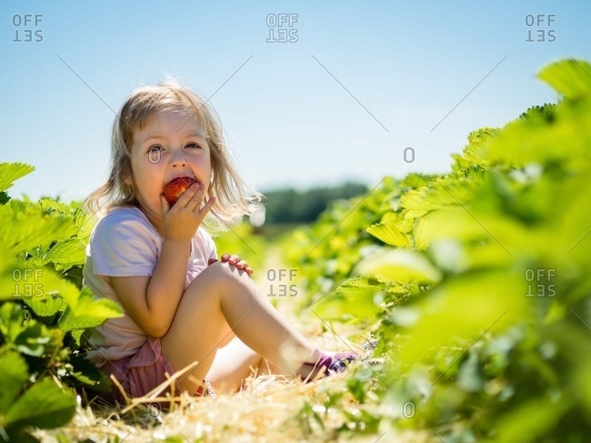 Little girl eating strawberry in field