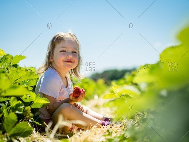 Smiling child sitting in farm holding ripe strawberry