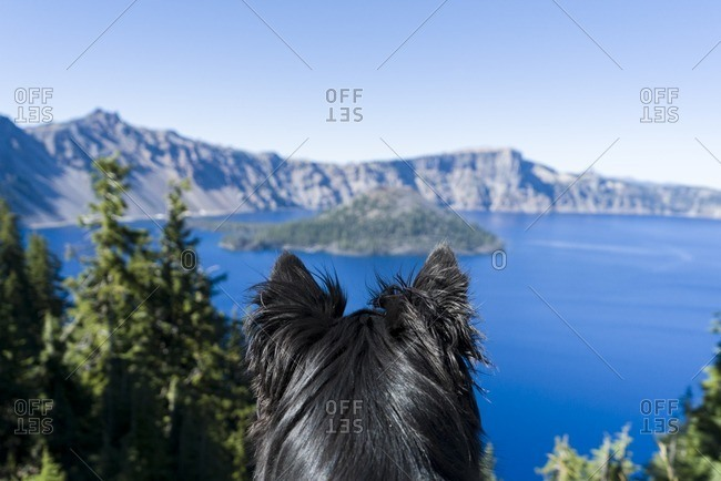 Rear view of dog against Crater lake