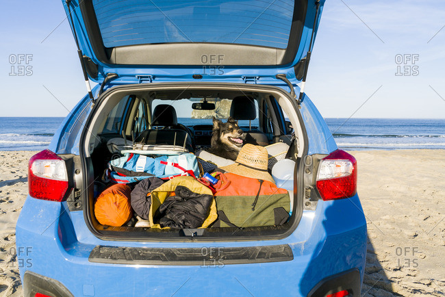 Dog with camping equipment in car at cannon beach