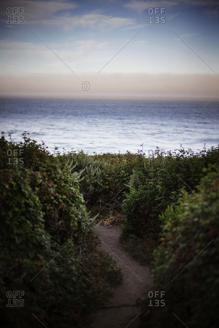 Footpath passing through plants by sea