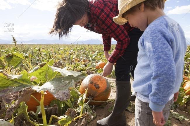 Woman with son examining pumpkin in farm