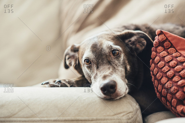 High angle view of dog resting on sofa