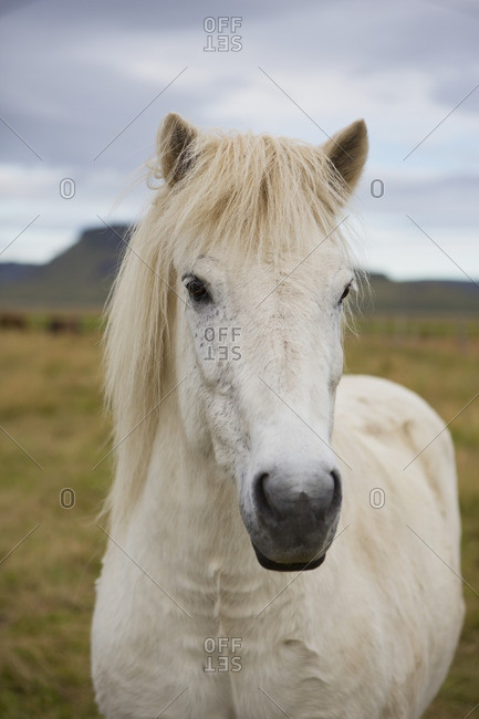 Close-up of a white horse in a field