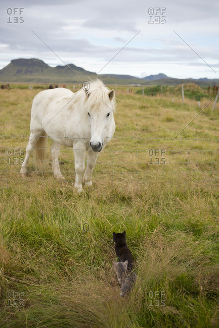 Horse and kittens facing each other in a field