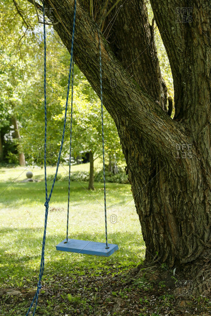A tree swing in the Catskills, New York
