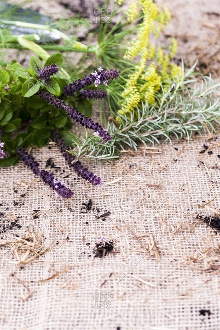 Mixed fresh herb cuttings arranged on burlap fabric