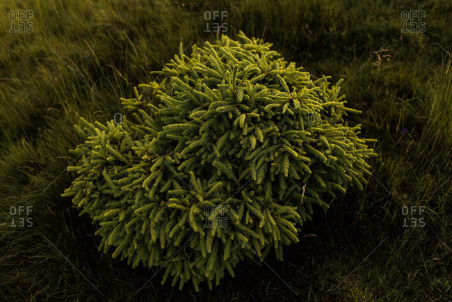 Green shrub in a grassy field