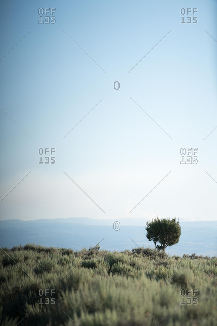 Tree in a field with mountains in the distance