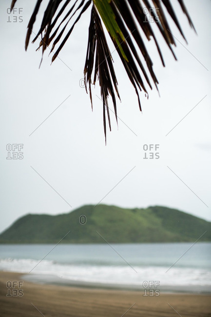 View of mountain from under a palm tree