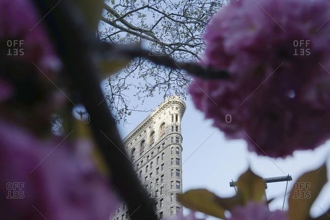 Flowers blooming against Flatiron building