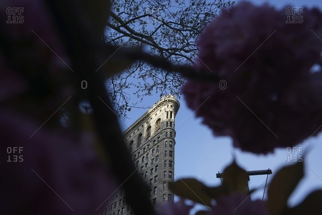 Low angle view of flowers blooming against Flatiron building