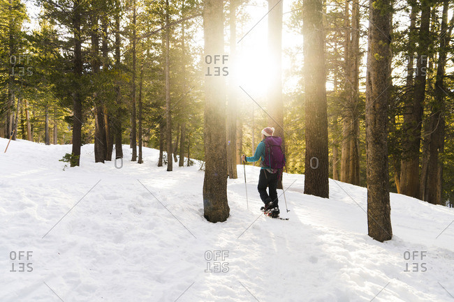 Woman with ski poles walking in snow covered forest