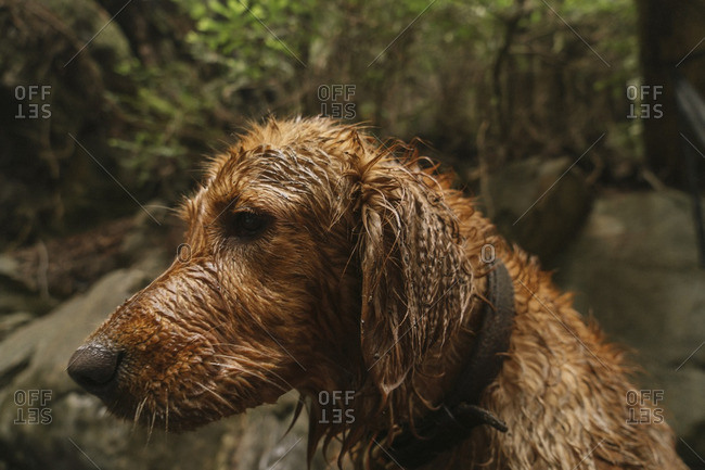 Side view of wet dog in forest