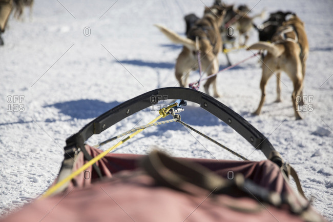 Dogs pulling sleigh on snow covered field