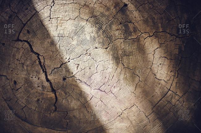 Close-up of cracked tree stump
