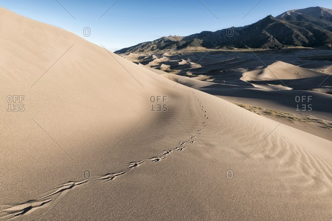 Animal print on sand dunes