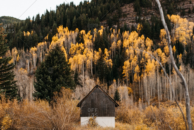 Barn in field below aspen-covered hill