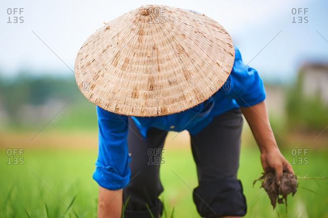Female rice farmer working