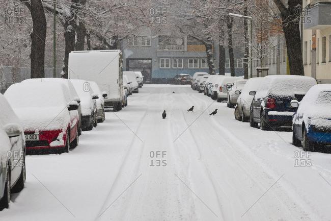 Birds in snowy street in Berlin, Germany