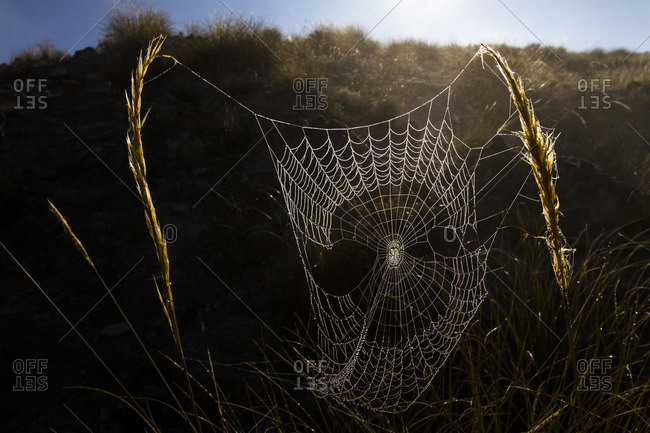 Spider web with dew at sunrise near Guadix