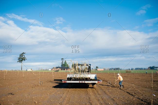 Boy helping plant crops in field