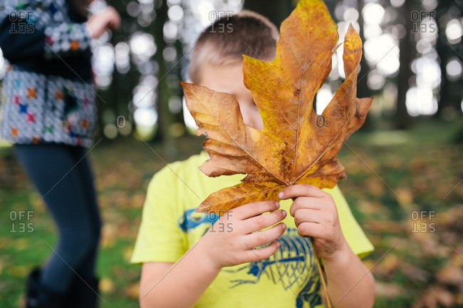 Boy hiding face with fall leaf