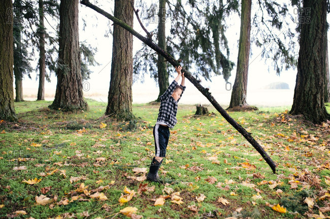 Boy holding up fallen branch in woods
