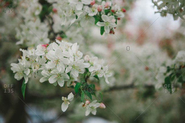 Flowers on a tree in bloom