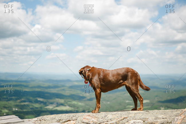 Dog looking over a vista