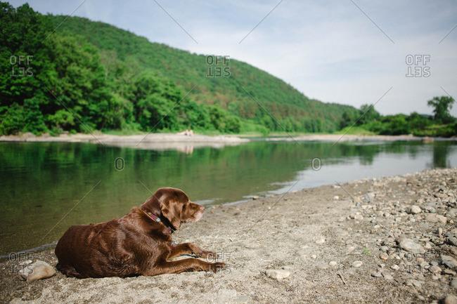 Dog lying on shore of lake