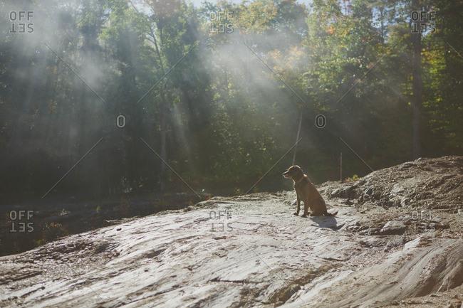 Dog sitting by sun dappled lake
