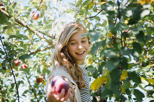 Girl among branches picking fruit