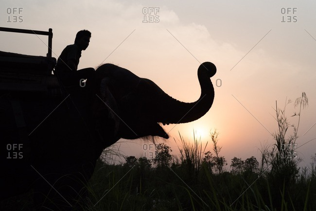 Chitwan National Park, Nepal - April 19, 2016: Silhouette of man riding elephant at sunset through Chitwan National Park