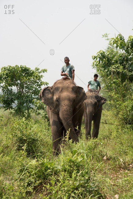 Chitwan National Park, Nepal - April 21, 2016: Two men riding elephants at Chitwan National Park