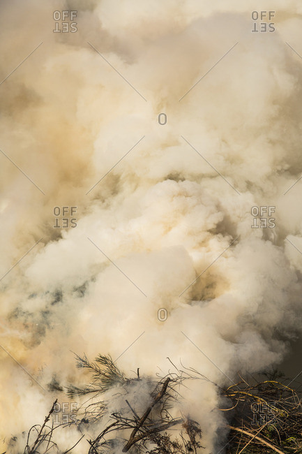High angle view of smoke in forest