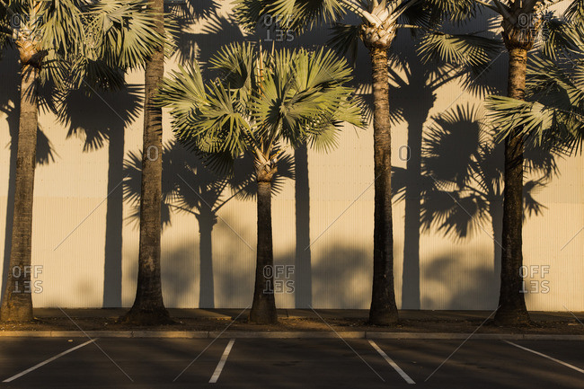 Palm trees against corrugated wall by street