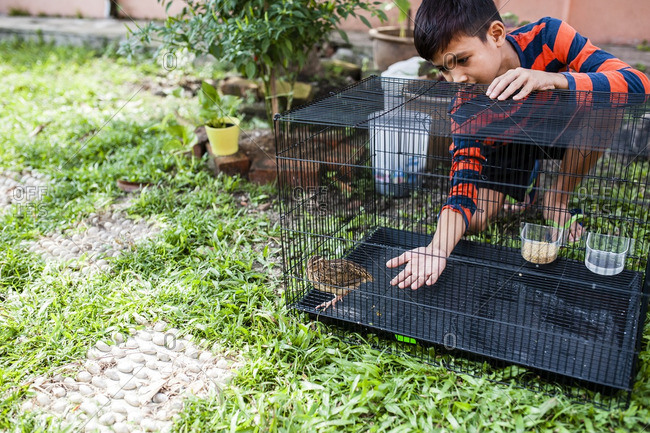 Boy reaching hand into crate with chicken