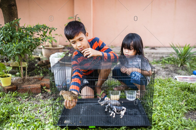 Boys holding a chicken in cage