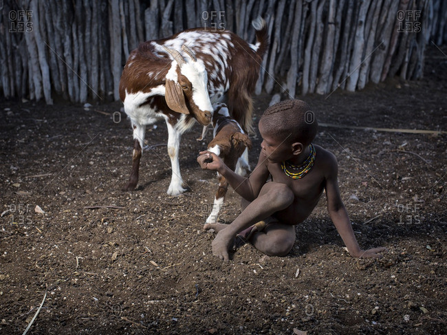 Namibia - May 30, 2014: Namibian boy grabbing goat's leg
